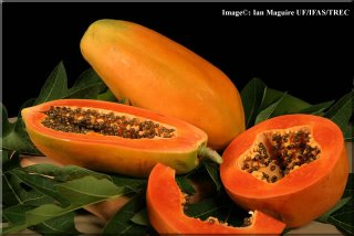 http://evialfadhl.files.wordpress.com/2010/05/papaya-lg.jpg